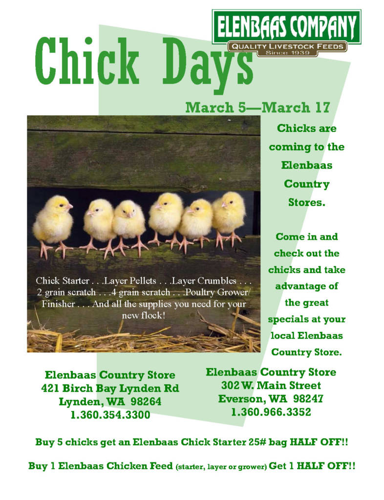 chicken, chicks, whatcom county, everson, lynden, blaine, sumas, custer, hens, roosters